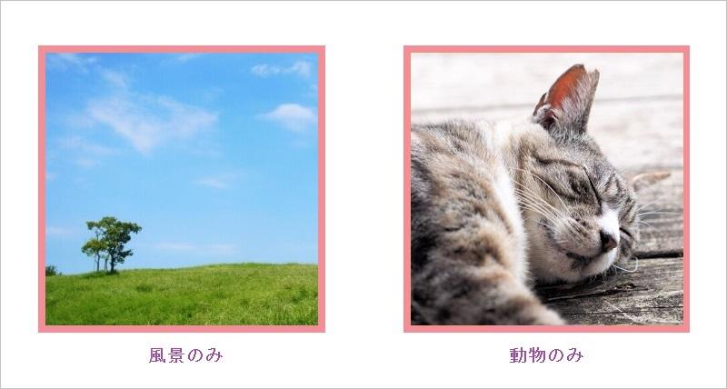OmiaiのNG写真:風景のみ・動物のみ